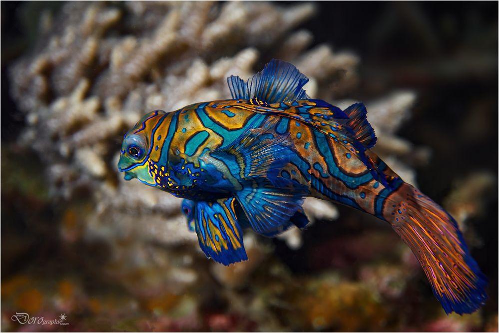 Farben im Meer