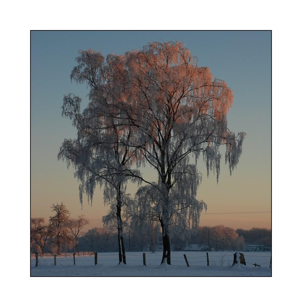 Farben im Winter