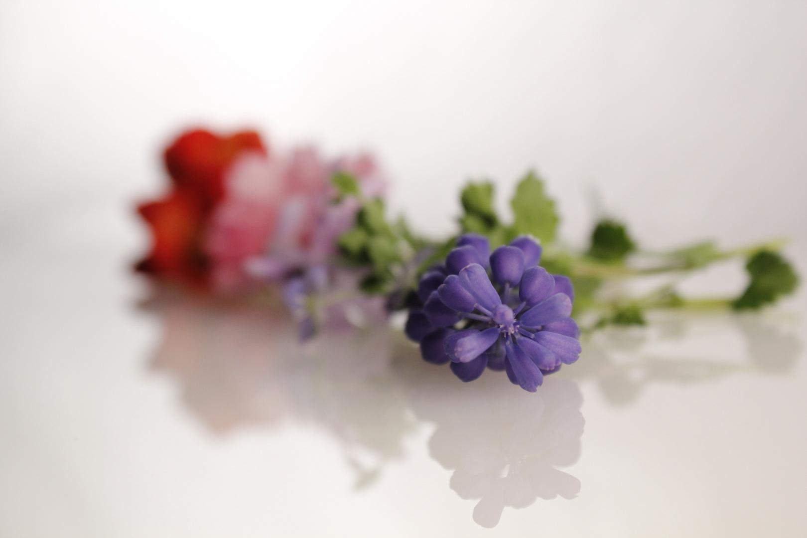 Farben mit Blumen