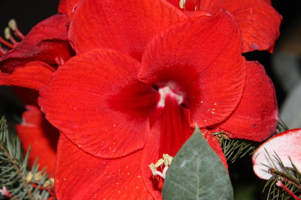 farben und ihre wirkung foto bild pflanzen pilze flechten bl ten kleinpflanzen natur. Black Bedroom Furniture Sets. Home Design Ideas
