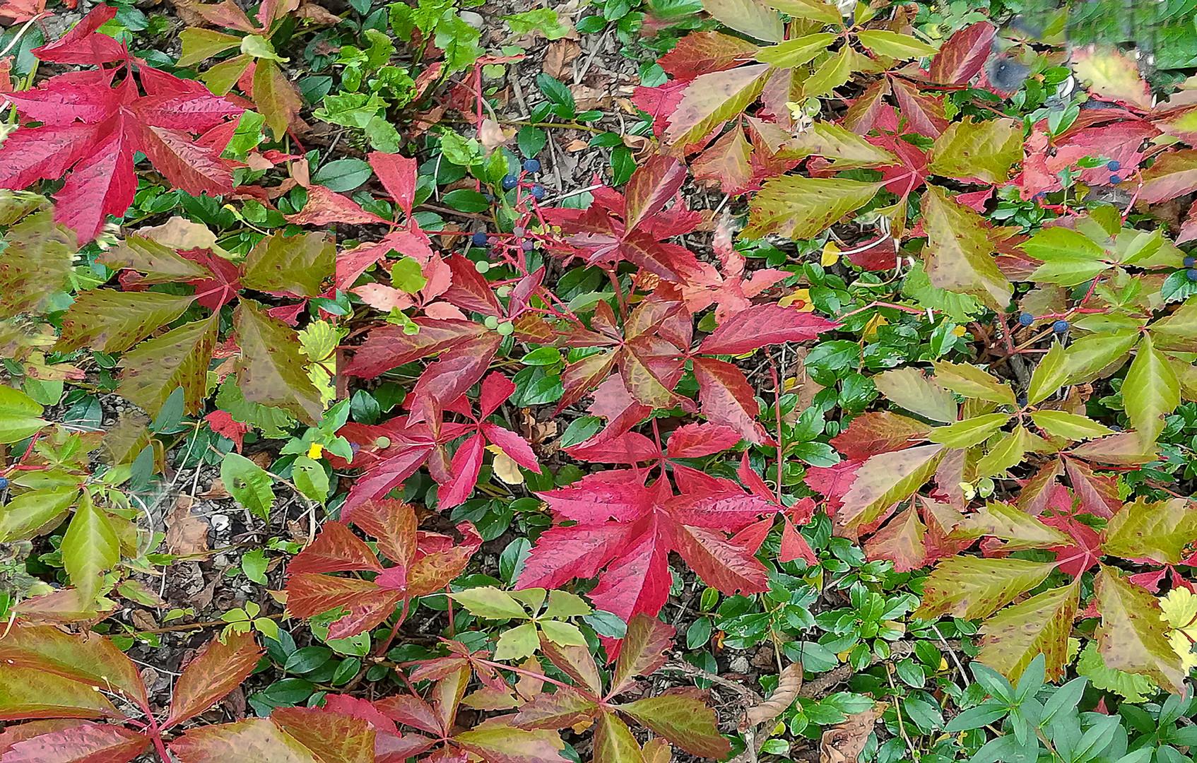 Farben vom  Herbst
