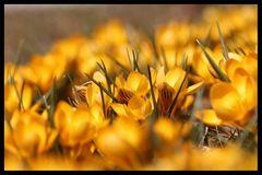 Farben......Düfte.......Frühling