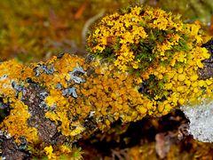Farbenfrohe Dekoration auf einem kleinem Ast im Winter! - Décoration sur une petite branche...