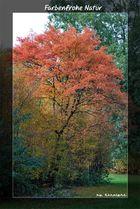 Farbenfrohe Natur