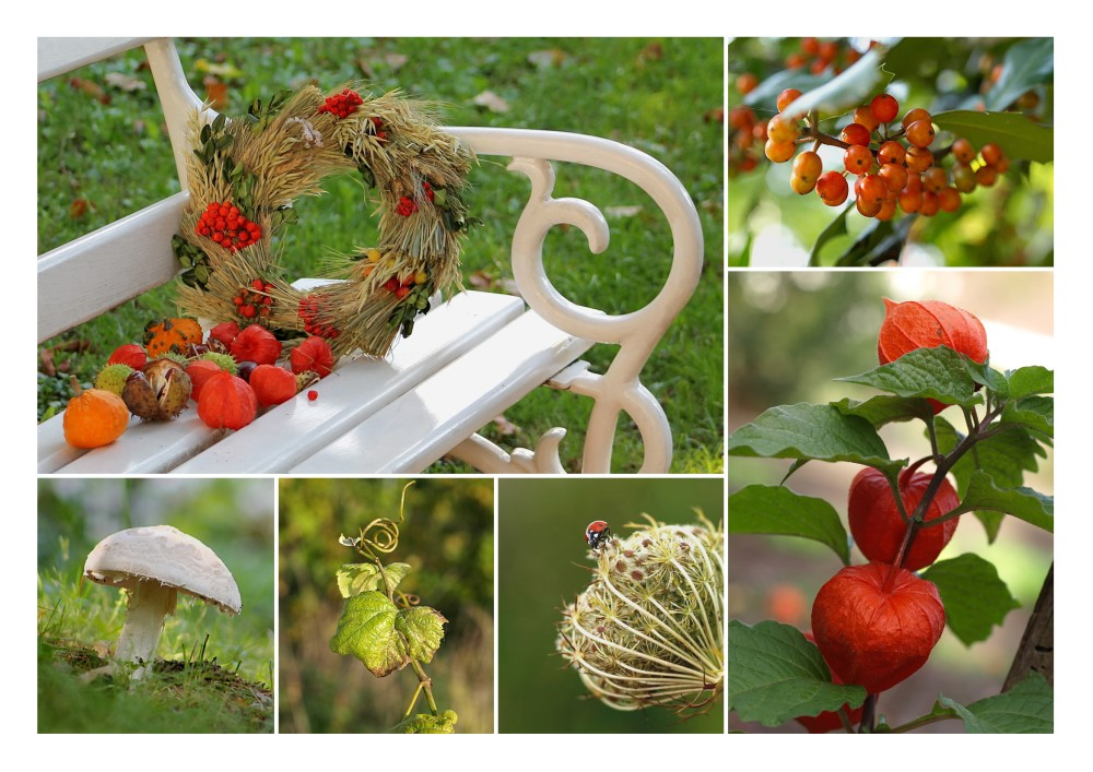 - Farbenfroher Herbst -