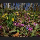 Farbenfroher Waldboden