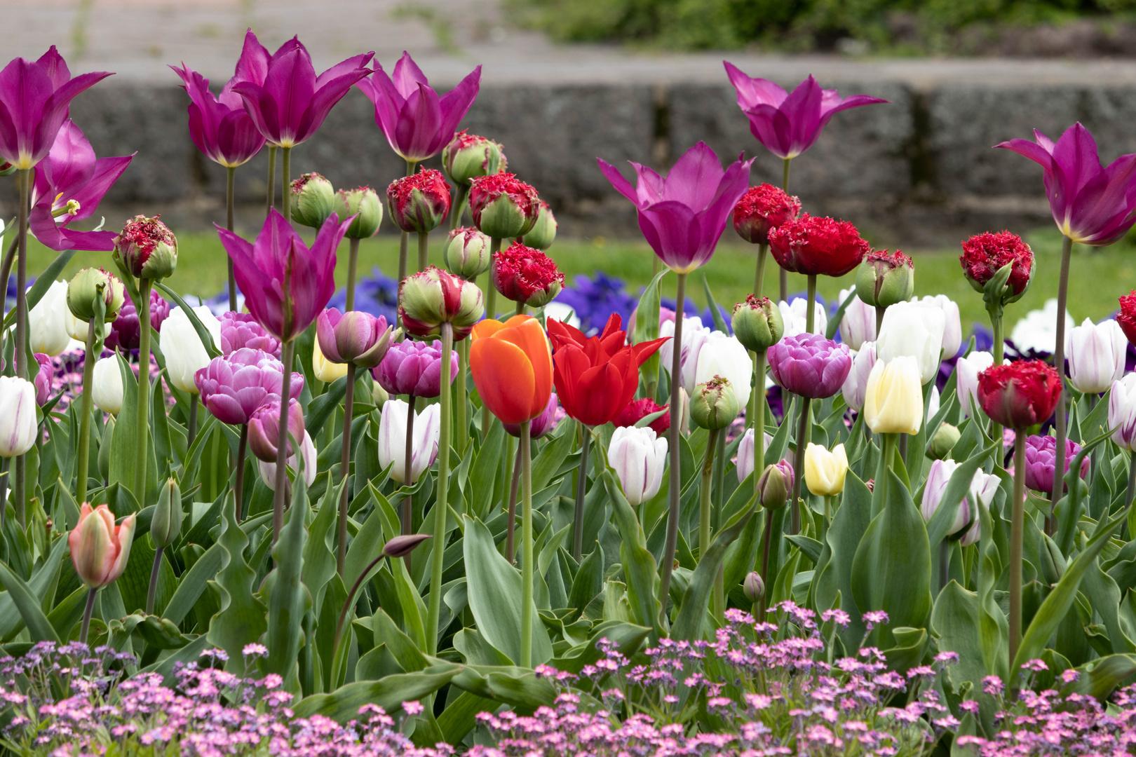 """Farbenfrohes """"Getümmel"""" am 1. Mai"""