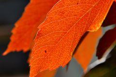 Farbenkünstler Herbst