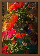 Farbenpracht auf dem Balkon