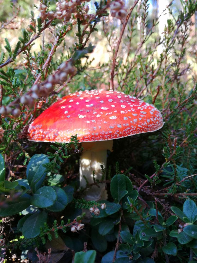 Farbenpracht im Wald