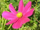 Farbenprächtige Blüte, Ein Schmuckkörbchen