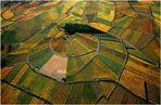 Farbenrausch in den Weinbergen #03