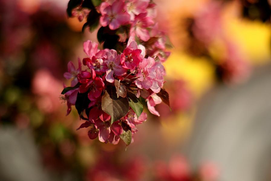 Farbenspiel des Frühlings