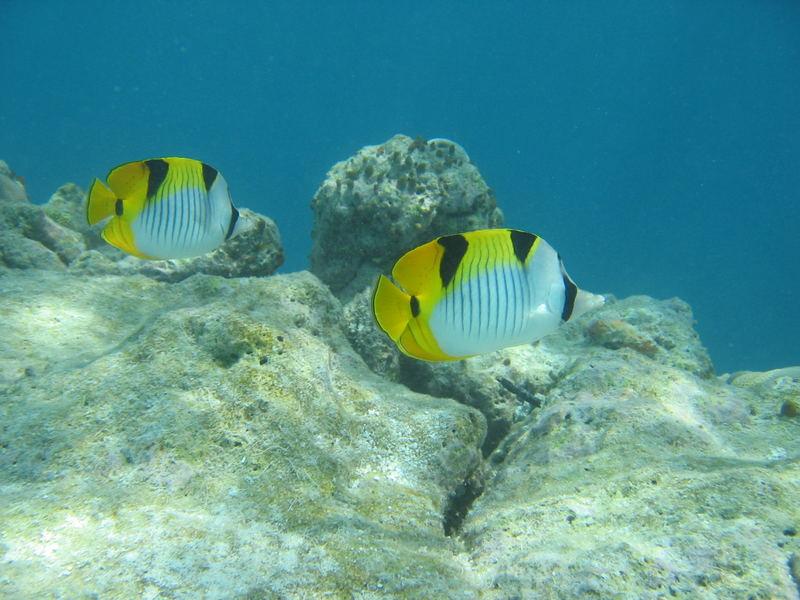 Farbige Unterwasserwelt