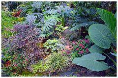 farbiger Dschungel im Garten