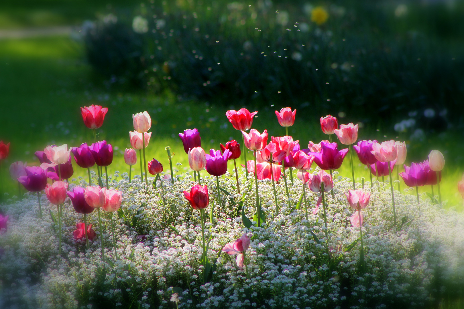 Farbiger Frühling