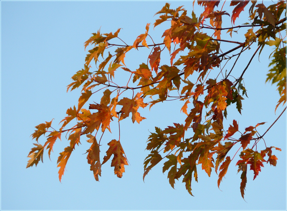 farbiger September