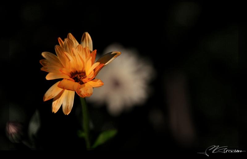 Farbklecks im Blumenbeet