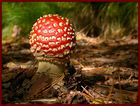 Farbklecks im Wald