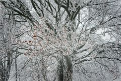Farbkolonie im Schneewald