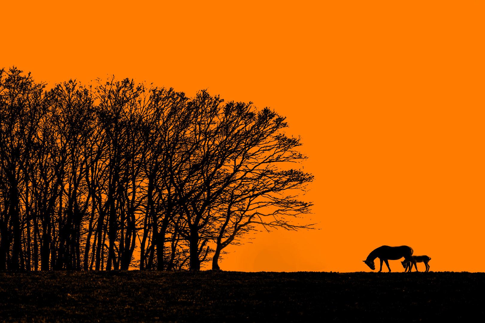 Farblook composing Pferde mit der Natur