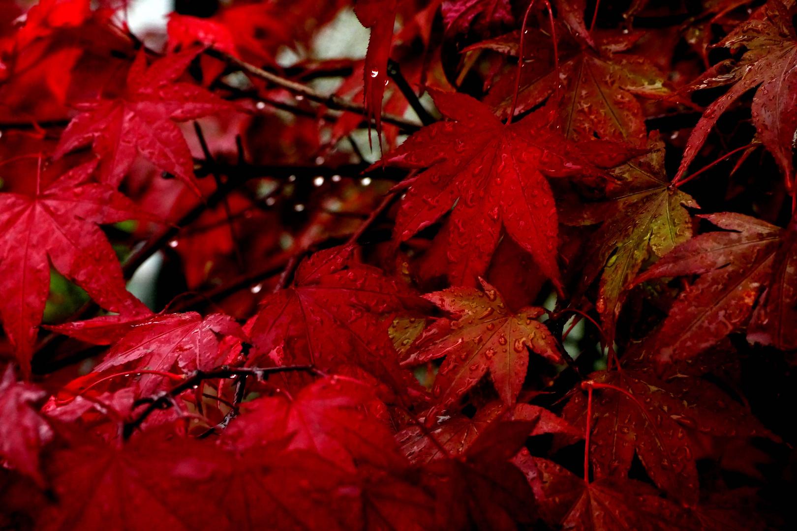 Farbnuancen in Rot.