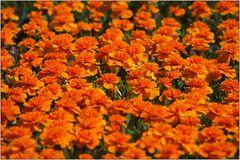 Farborgie im Blumenbeet
