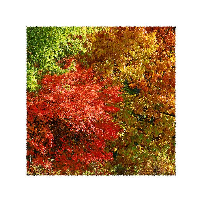 Farbpalette Foto Bild Jahreszeiten Herbst Natur Bilder Auf