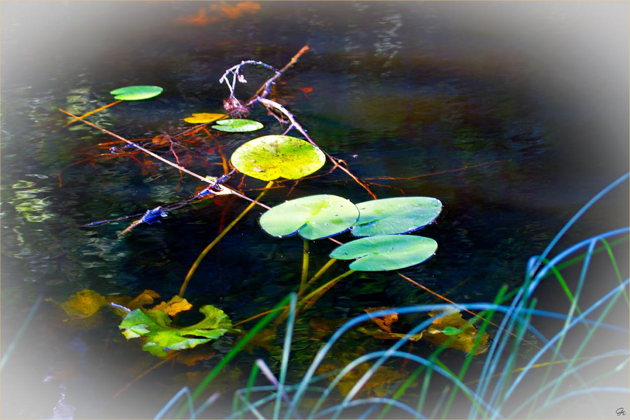 Farbpaletten der Natur