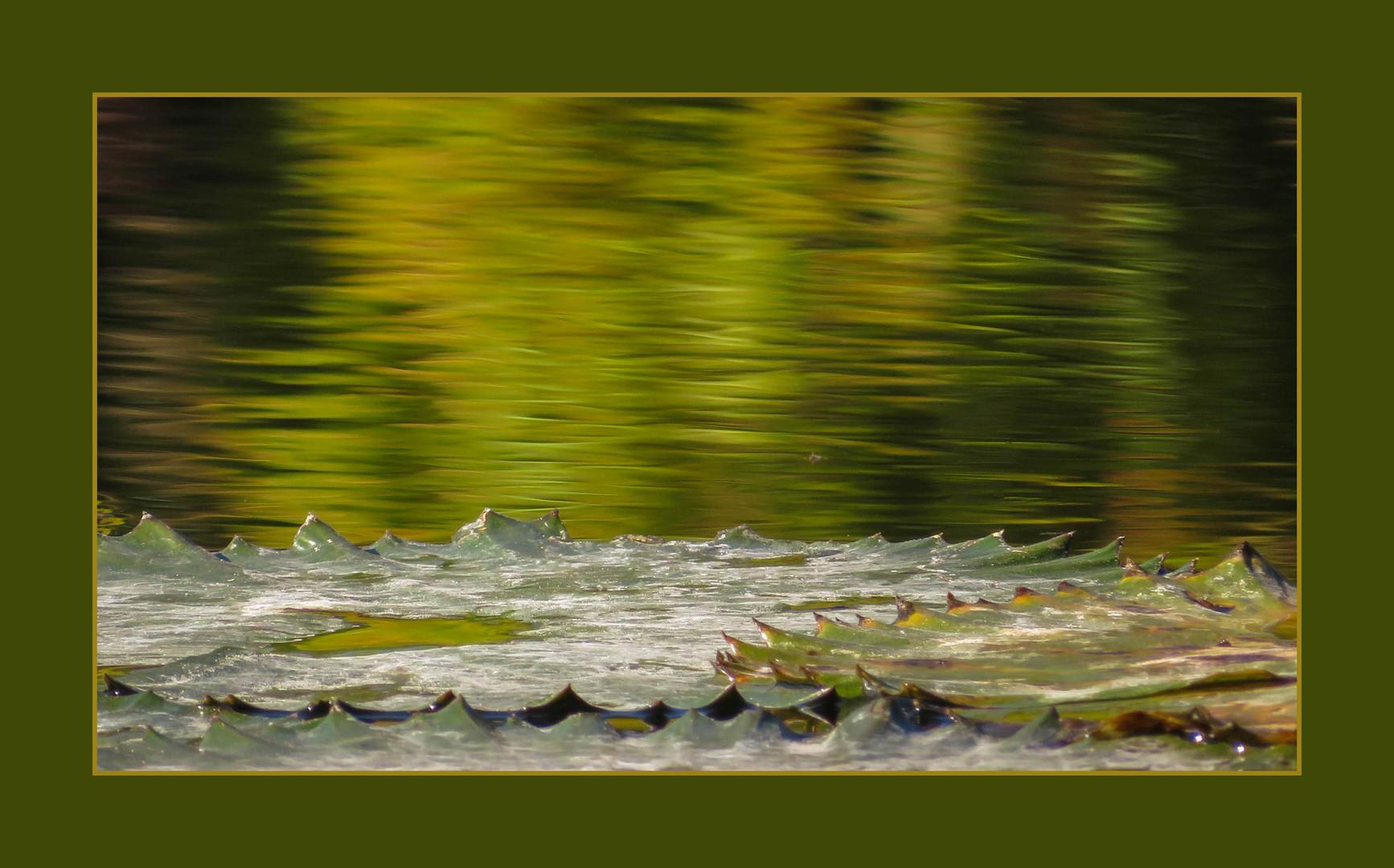 Farbrausch im Wasser