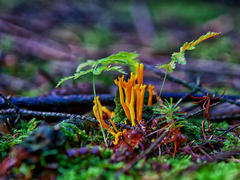 Farbspiel der Natur