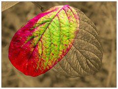 Farbstadien im Herbst und danach