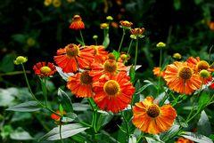 Pflanzen und Blüten