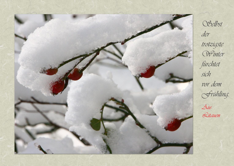 Farbtupfer im Schnee