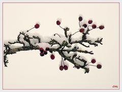 Farbtupfer im Schnee...
