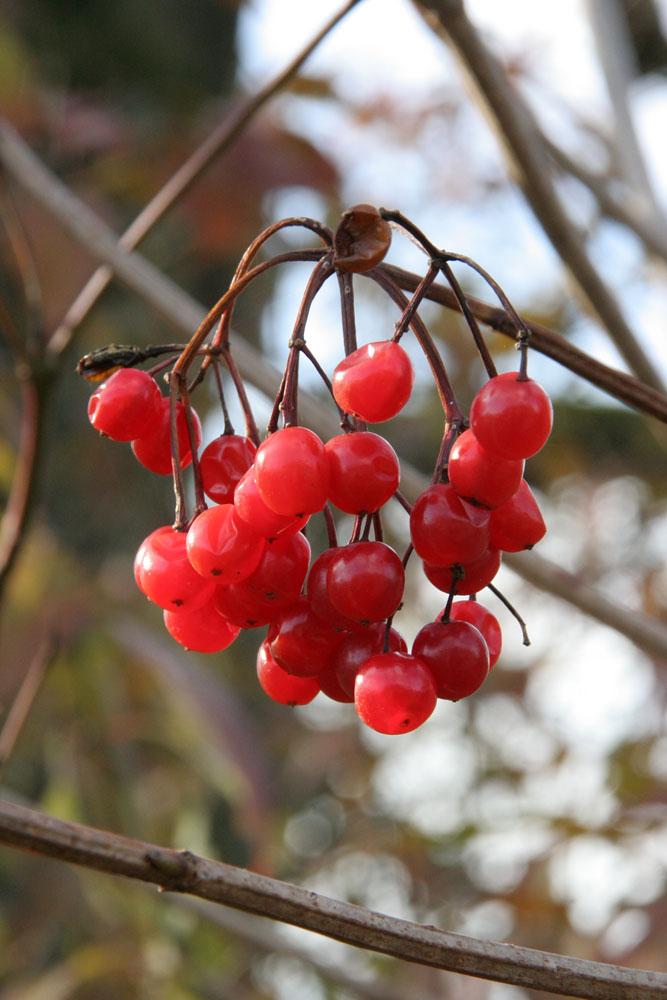 Farbtupfer in der braunen Herbstlandschaft