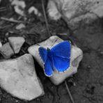 Farfalla colorata 2