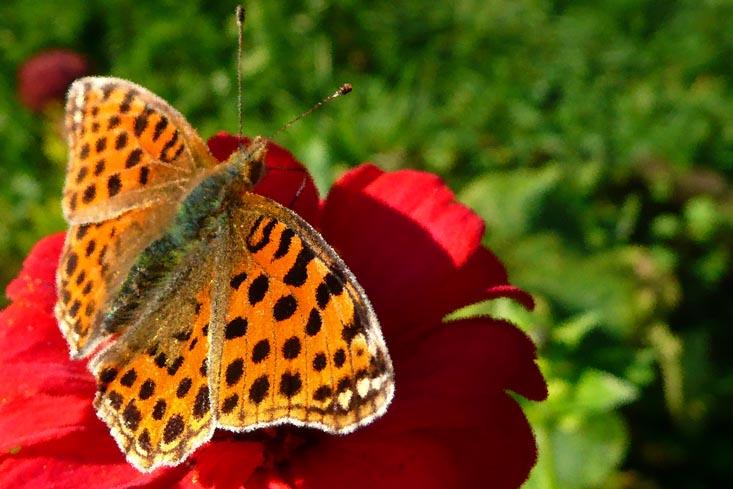 Farfalla con fiore