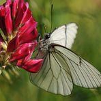...farfalla...