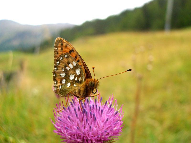 Farfalla in posa..
