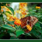 "Farfalla n. 1 di 5   ""Prét-à-Porter"""