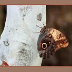 """Farfalla n.2 di 5 """"Casual"""""""