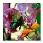 """Farfalla n.4 di 5 """"Positano"""""""