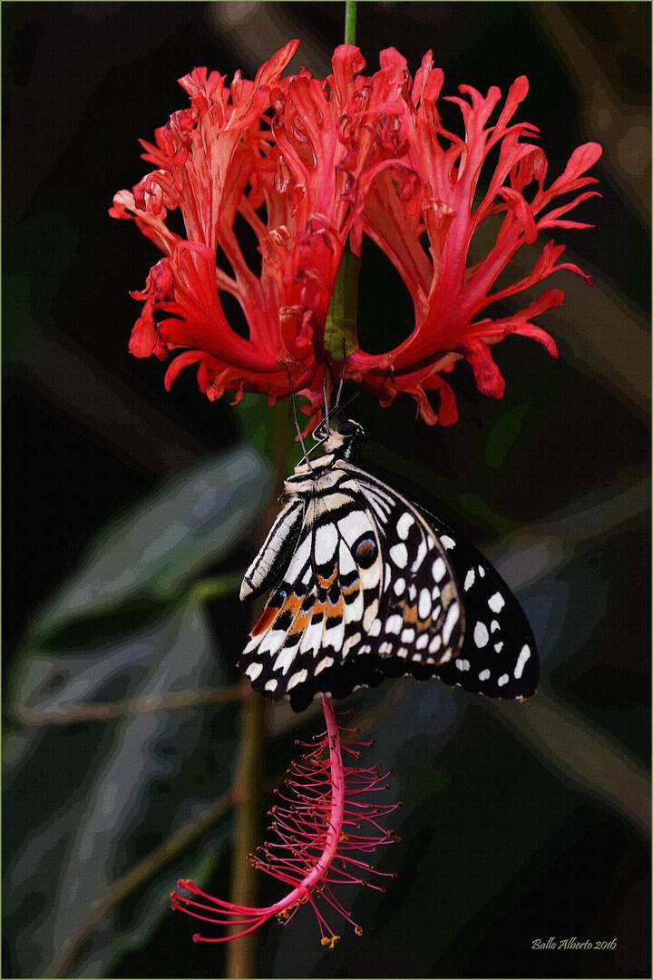 """Farfalla """"Papilio Demoleus"""""""