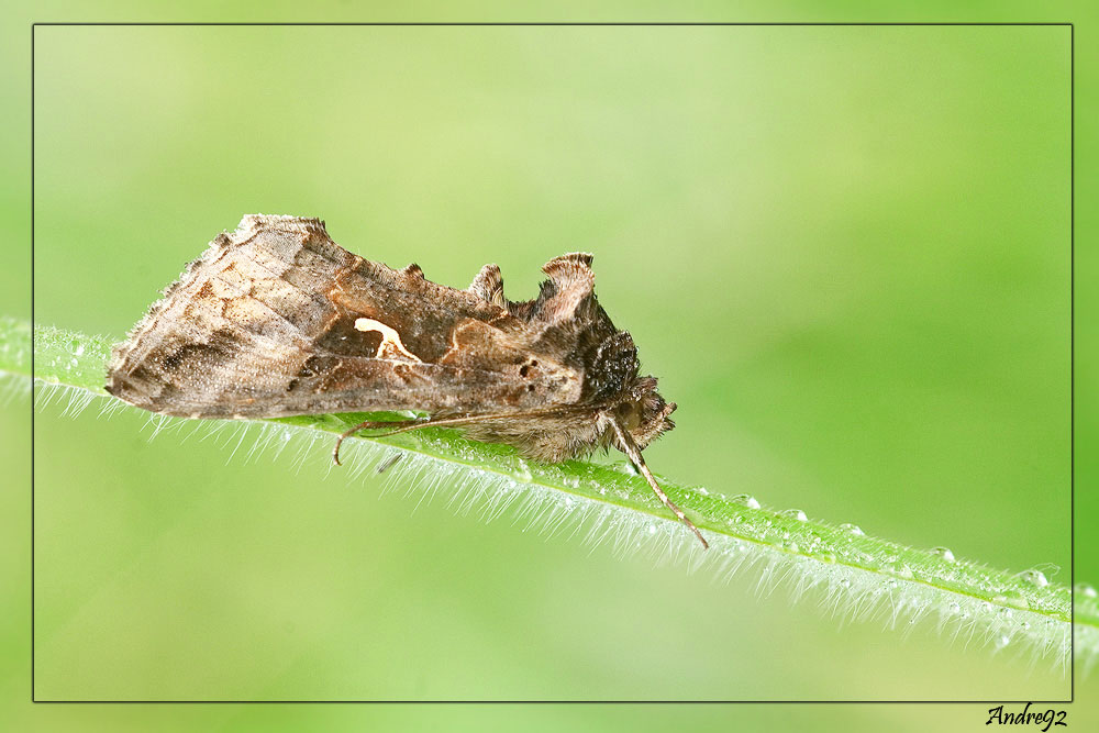 Farfalla senza nome
