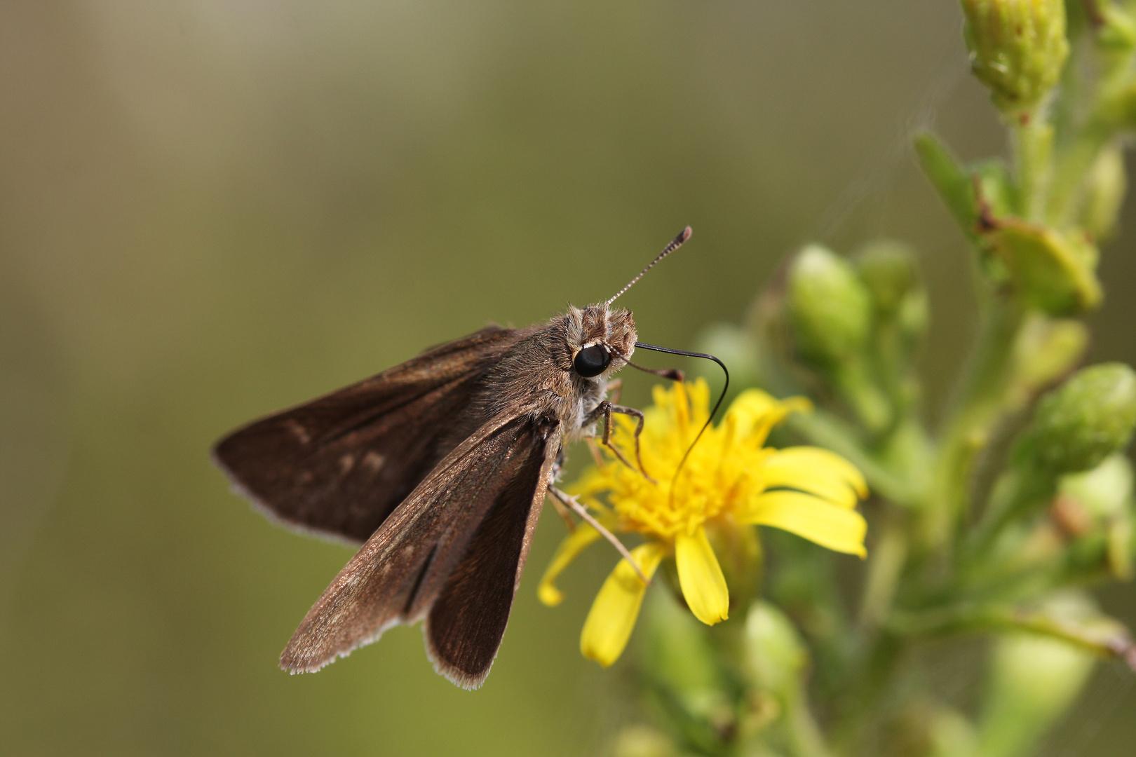 Farfalla s.p.