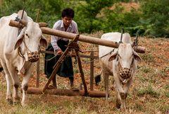Farmer with Plough