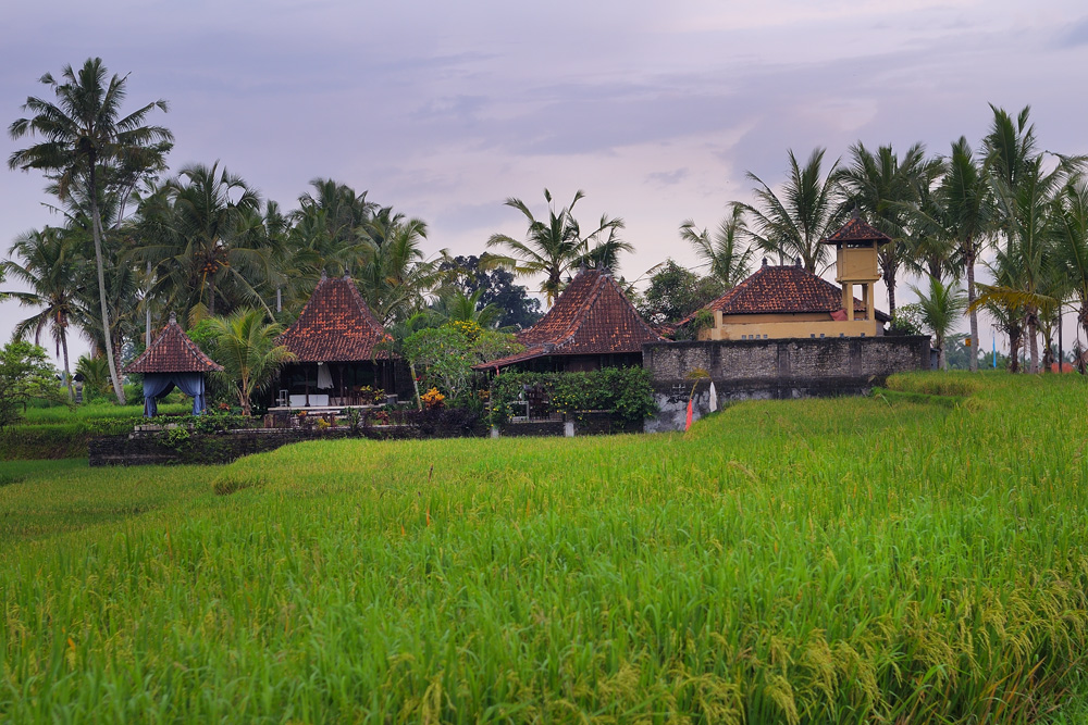 Farmers housing complex in the middle of paddy fields