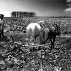 Farming   3