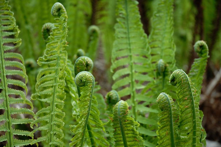 Farn Pflanze